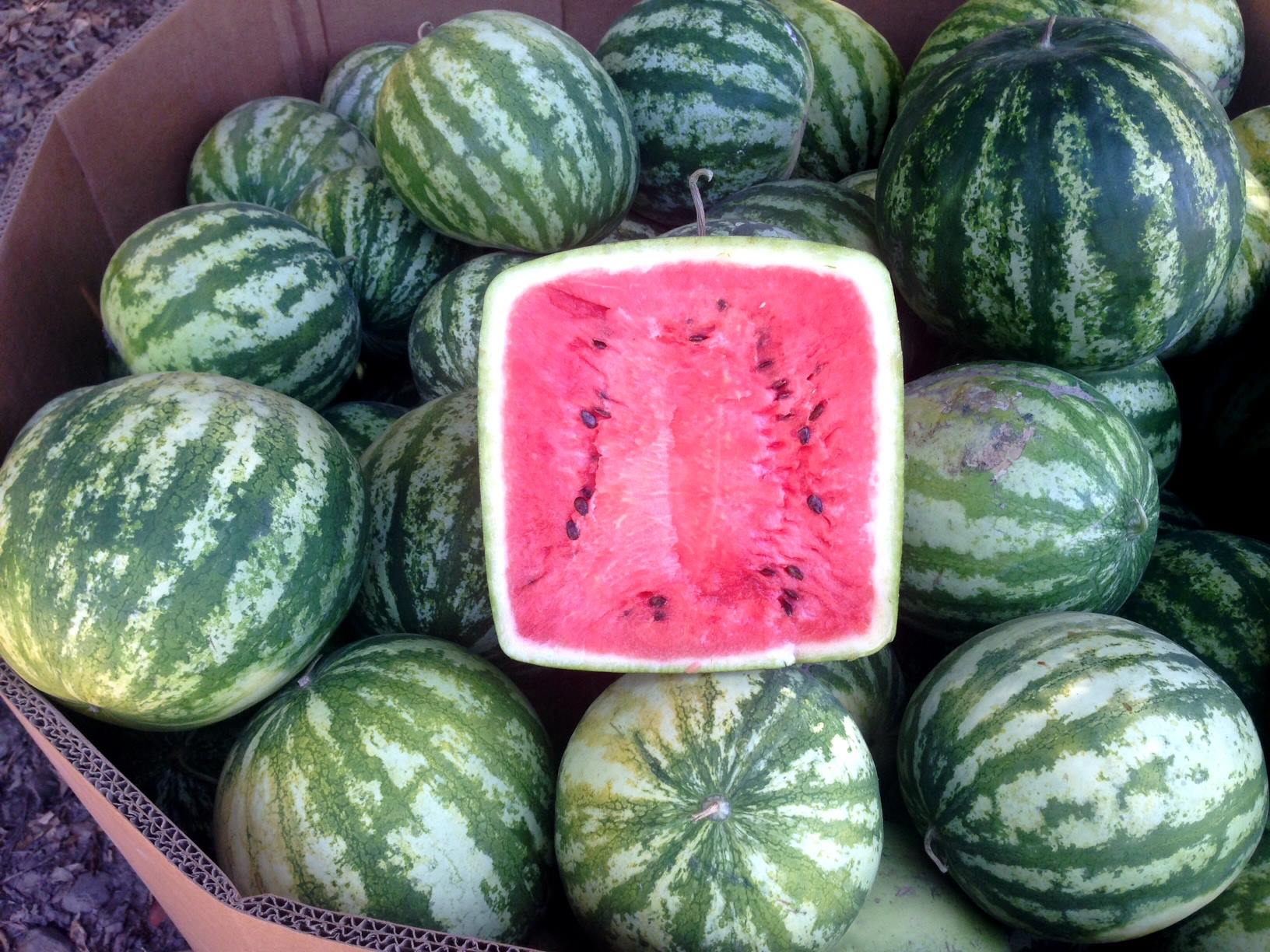 how to grow giant watermelon